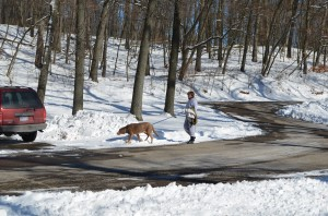 A Lady & Her Dog Out for a Walk