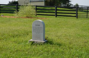 Great Grandpa's Grave (the Amazing Noor at Rest at Old Friends)