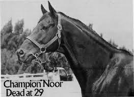 Noor Obituary (Photo from Horseandman)