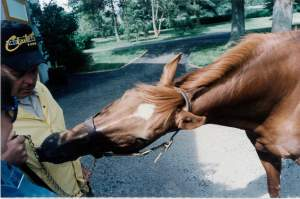 Secretariat Reaching for a Starlight Mint