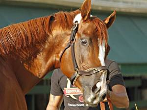 California Chrome Yes, We're ALL Looking at You, Kid!
