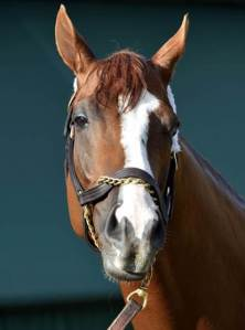 California Chrome Sure Doesn't Look Like He's Stressed