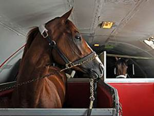 California Chrome on K2 flight from Louisville to Baltimore