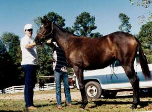 Untarnished's Jockey Club Registration Photo (1990)
