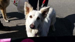 Dolly Meets Paula of Pawla's Pantry (fabulous dog treats) at the Howell Farmers' Market