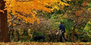 "Man Walking Dog in ""Our"" Metropark (photo from Huron Meadows' website)"