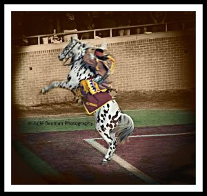 One of Julie's FABULOUS photos (Osceola & Renegade)