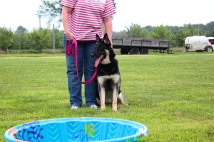 Kiddie Pools for drinking and cooling off (for the dogs)