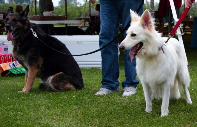 Cinder & Dolly